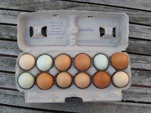 eggs in egg carton